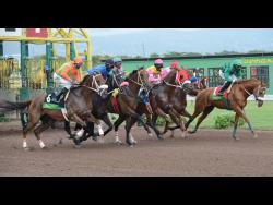 Horses leaving the starting gates at Caymanas Park.
