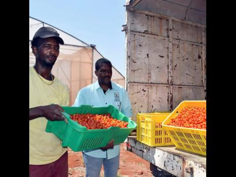 Farmers in St. Elizabeth donated fresh produce to persons in the quarantine areas. The produce were collected by the Rural Agricultural Development Authority and distributed in conjunction with the Ministry of Labor and Social Security.