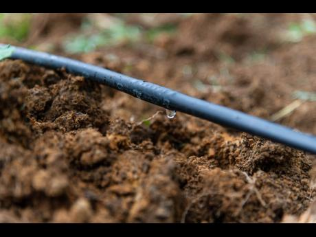 A part of the drip irrigation system.
