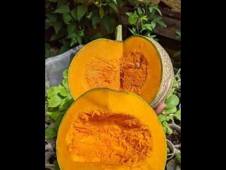 Rich pumpkin harvested from Melissa Green's garden.